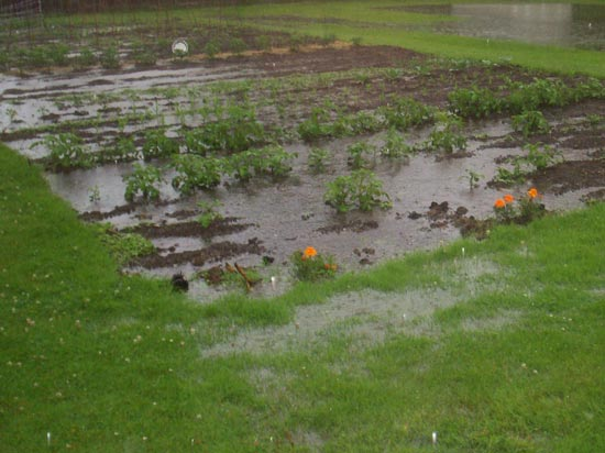 poplava u basti