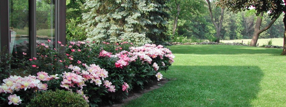 plantings-6-9-04-mc-peonies-960x360