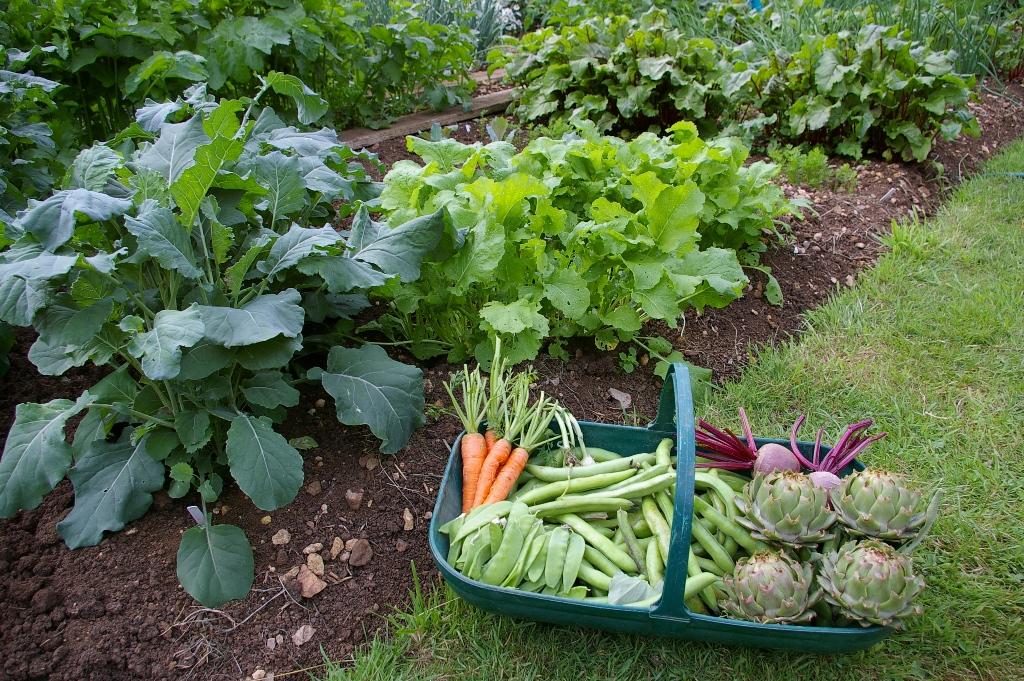 vegetable-garden