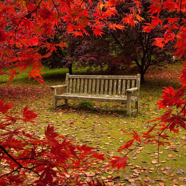 autumn-garden 2