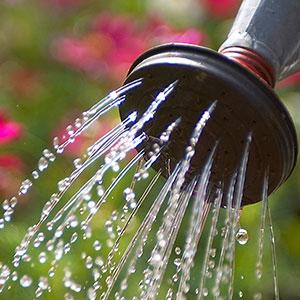 misc_watering_2_300