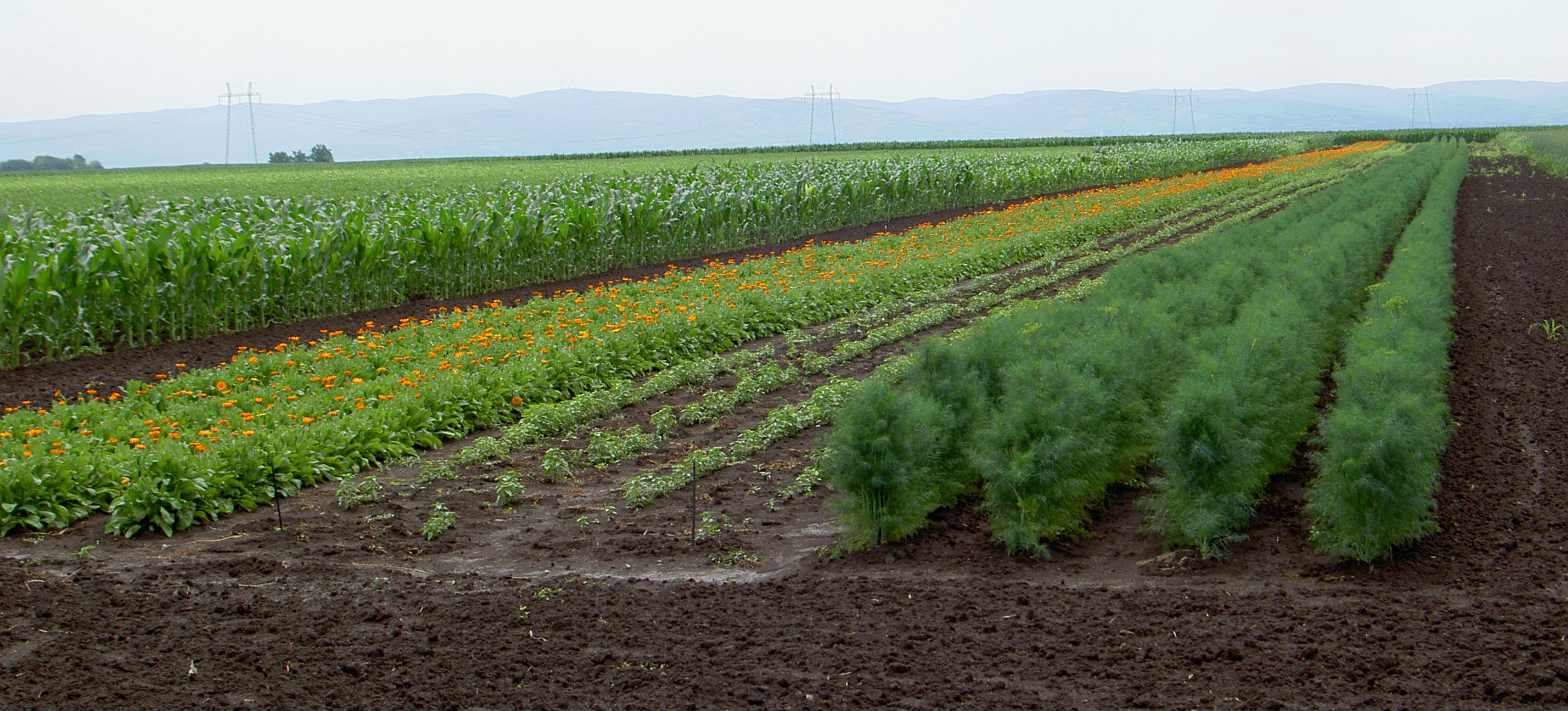 Pogodnost korišćenja morača za izolaciju u organskoj proizvodnji